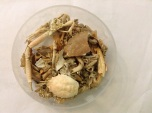 Many varied remains of crabs and other crustaceans, containing remains of Edible Crabs, Masked Crabs and Shore Crabs.
