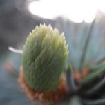 New soft cones